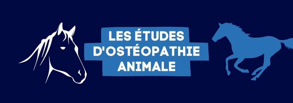 Ostéopathie Animale